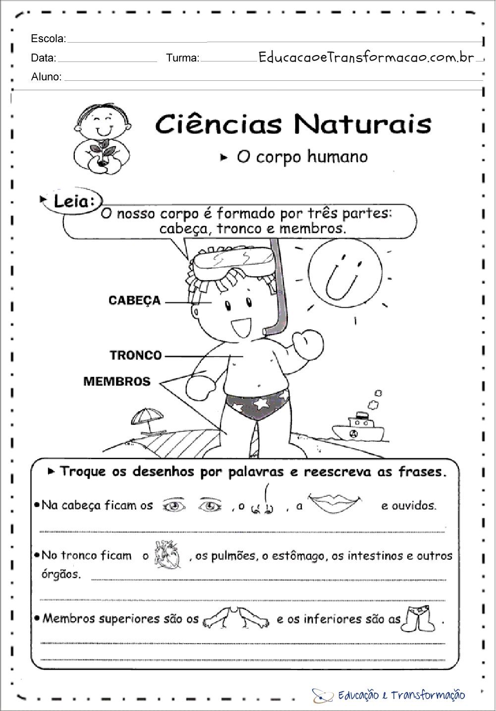 Atividades Corpo Humano – O corpo