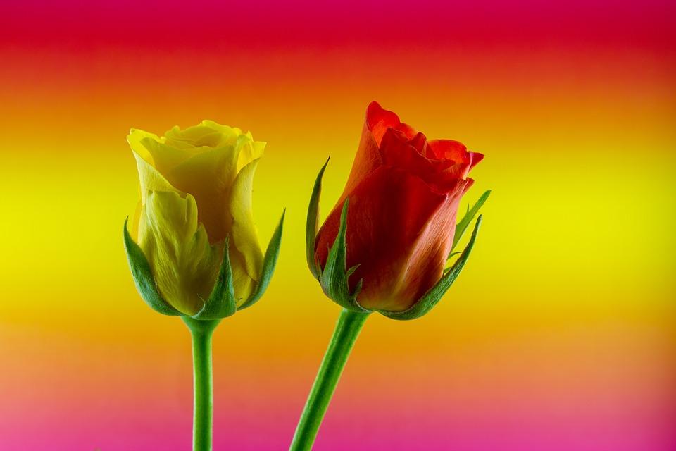 Flores Dia das Mães