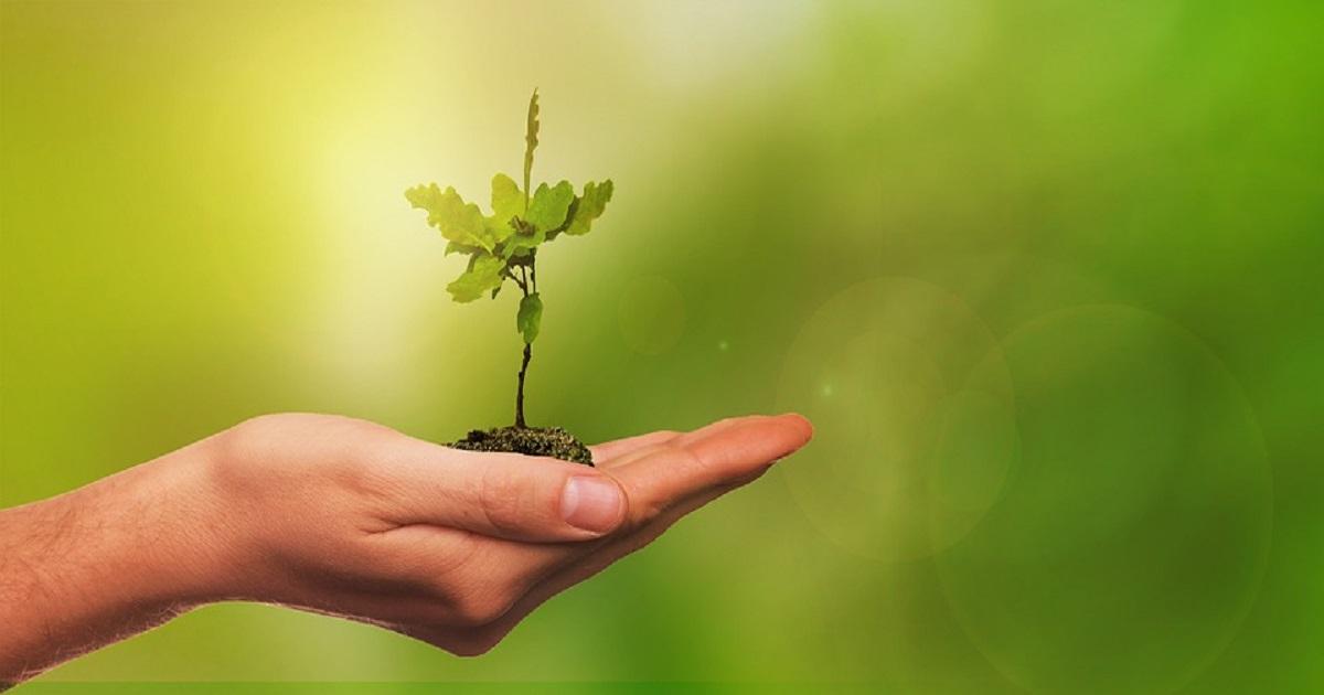 Plano de aula sobre meio ambiente para Educação Infantil