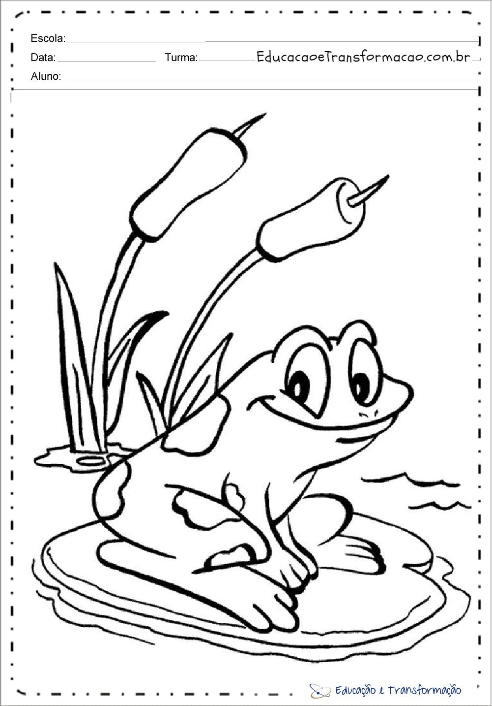Desenhos De Animais Para Colorir E Imprimir Sapo Educacao E