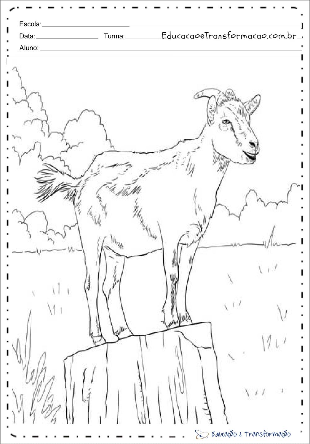 Desenhos Animais Fazenda Cabra Colorir Imprimir 3 Educacao E