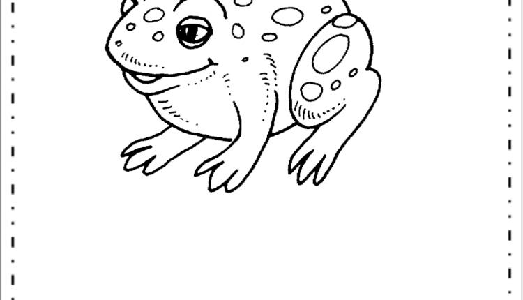 Sapo Desenhos De Animais Variados Para Colorir E Imprimir