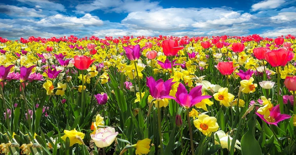 Atividades Primavera